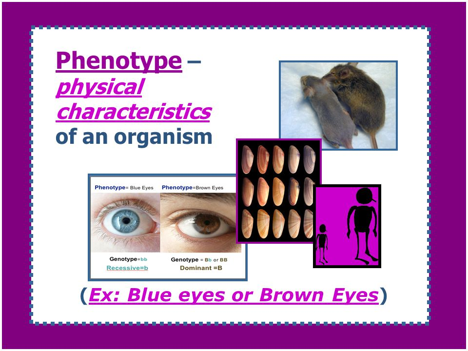 Phenotype – physical characteristics of an organism
