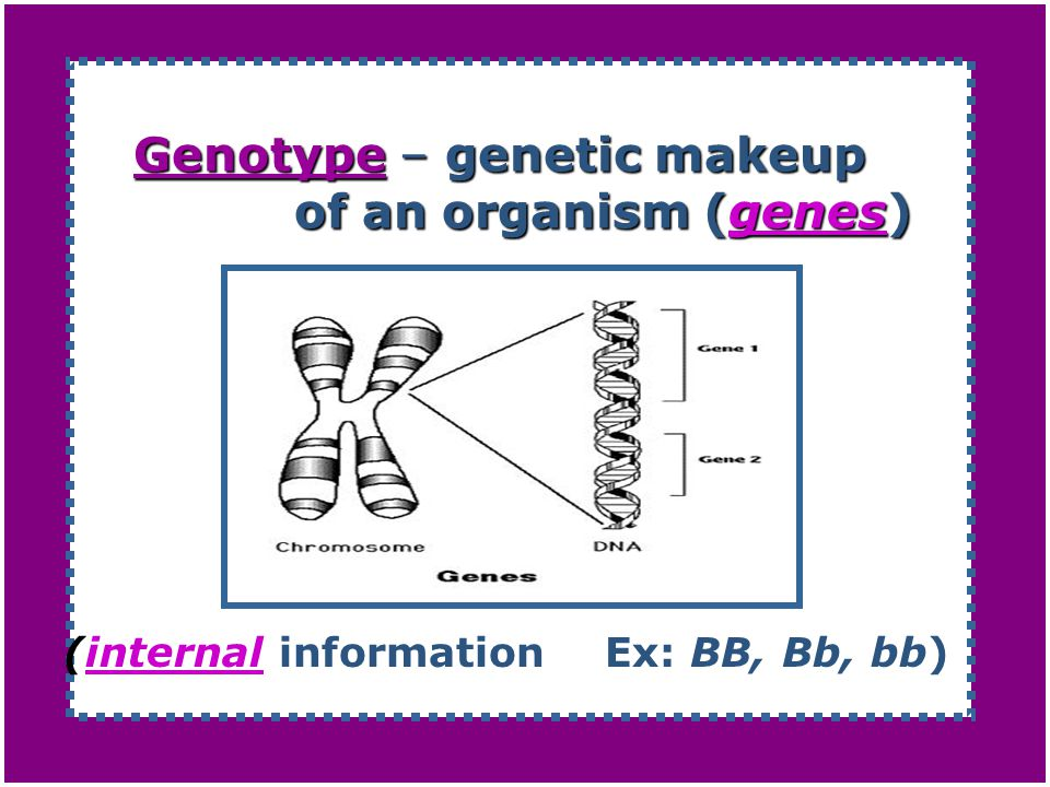 Genotype – genetic makeup of an organism (genes)