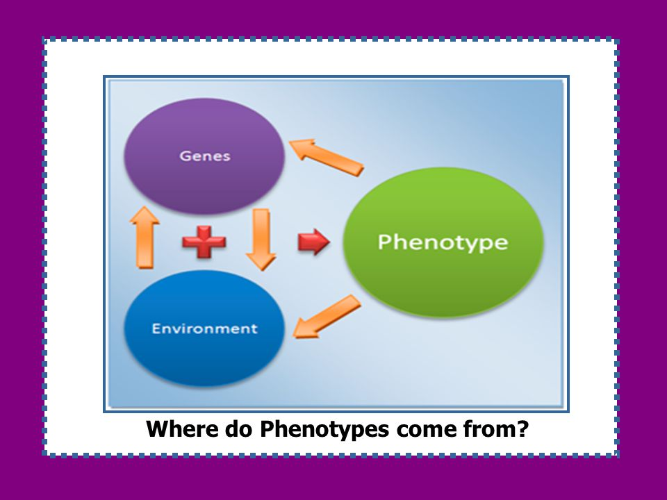 Where do Phenotypes come from