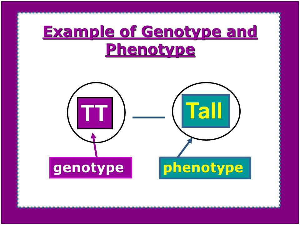 Example of Genotype and Phenotype