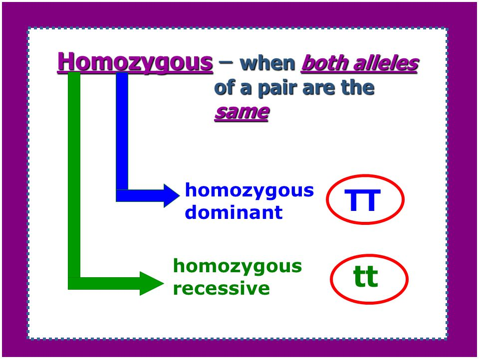 Homozygous – when both alleles of a pair are the same
