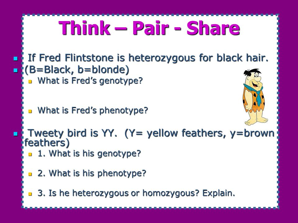 Think – Pair - Share If Fred Flintstone is heterozygous for black hair. (B=Black, b=blonde) What is Fred's genotype