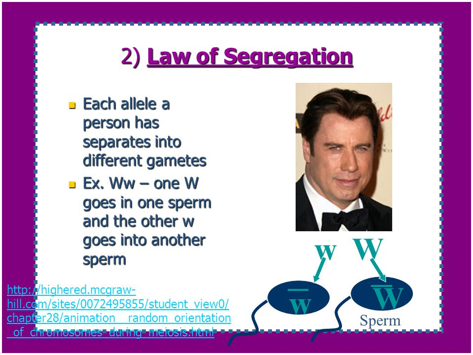w W W w 2) Law of Segregation