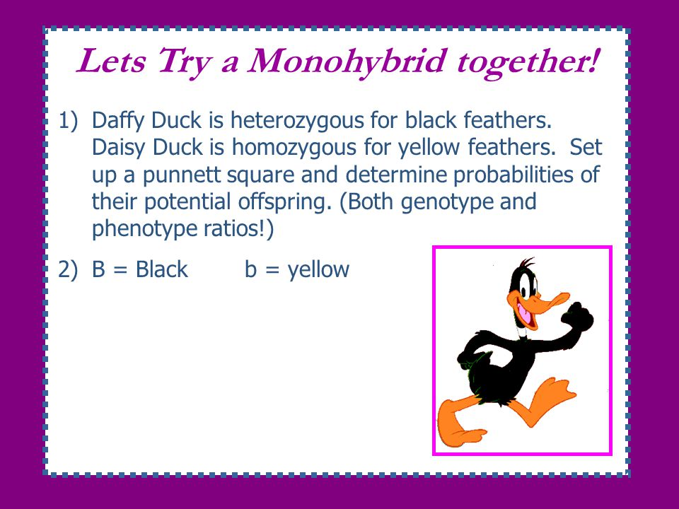 Lets Try a Monohybrid together!