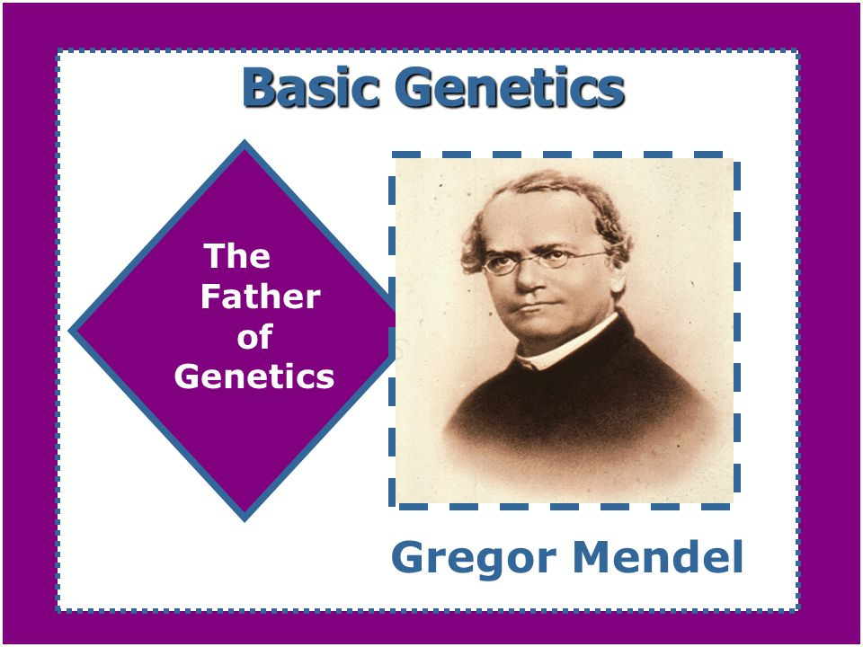 Basic Genetics The Father of Genetics Gregor Mendel