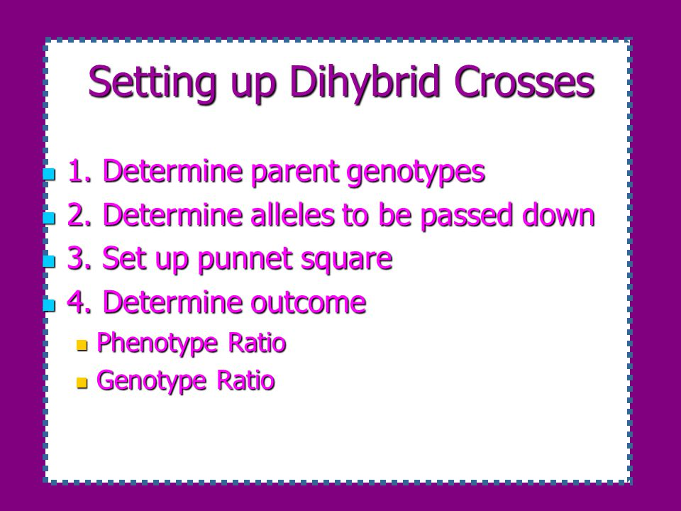 Setting up Dihybrid Crosses