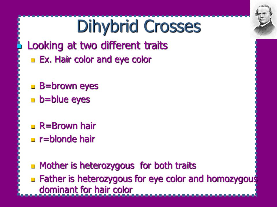 Dihybrid Crosses Looking at two different traits