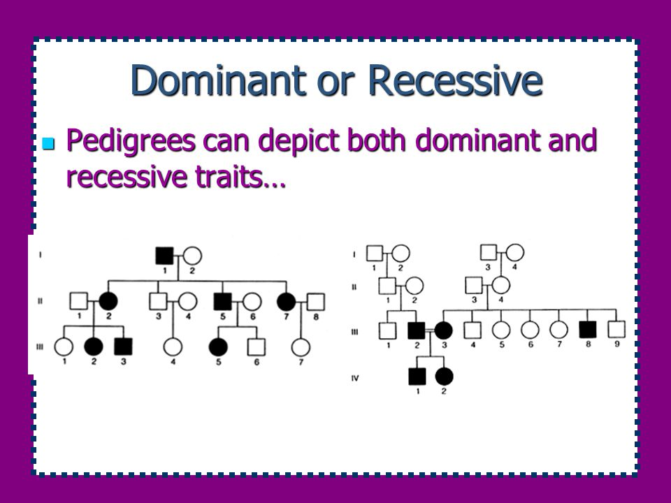 Dominant or Recessive Pedigrees can depict both dominant and recessive traits…
