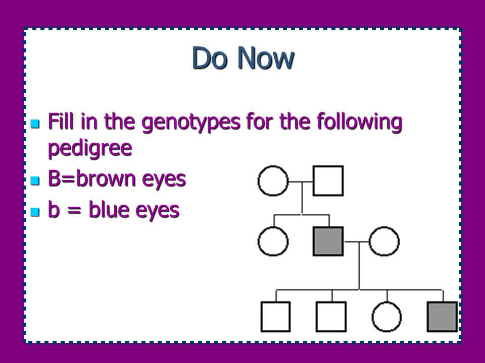 Do Now Fill in the genotypes for the following pedigree B=brown eyes