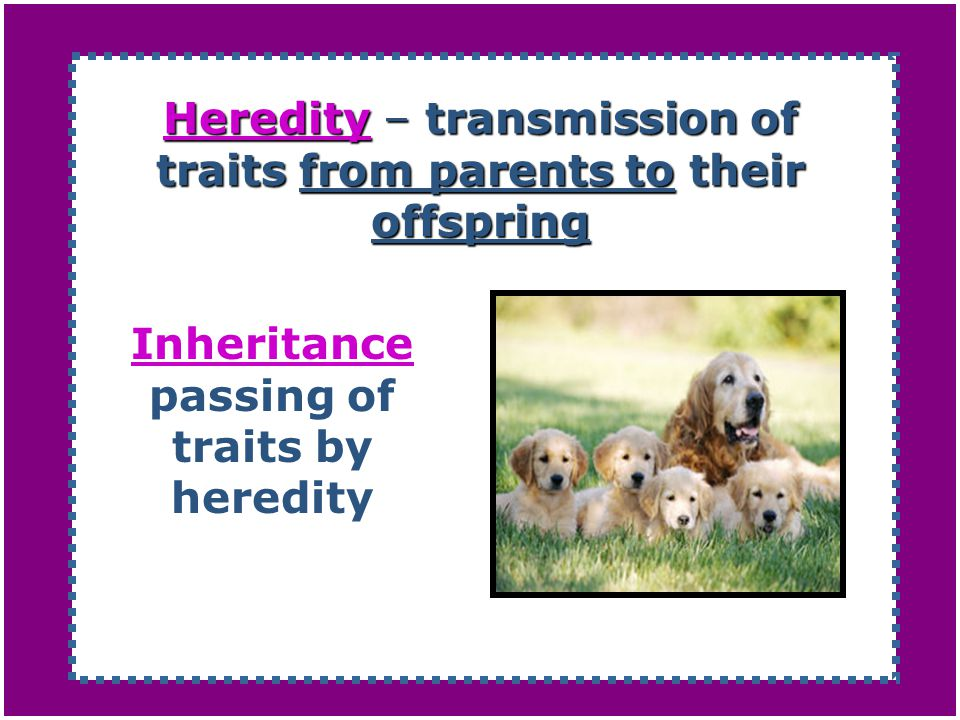 Heredity – transmission of traits from parents to their offspring
