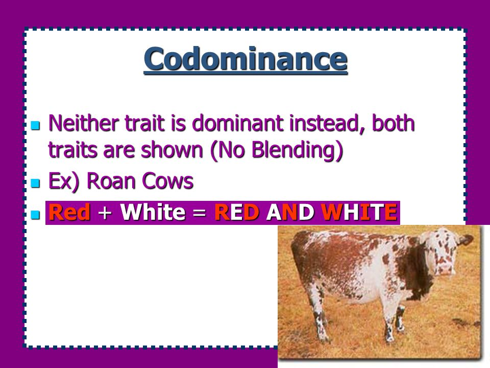 Codominance Neither trait is dominant instead, both traits are shown (No Blending) Ex) Roan Cows.
