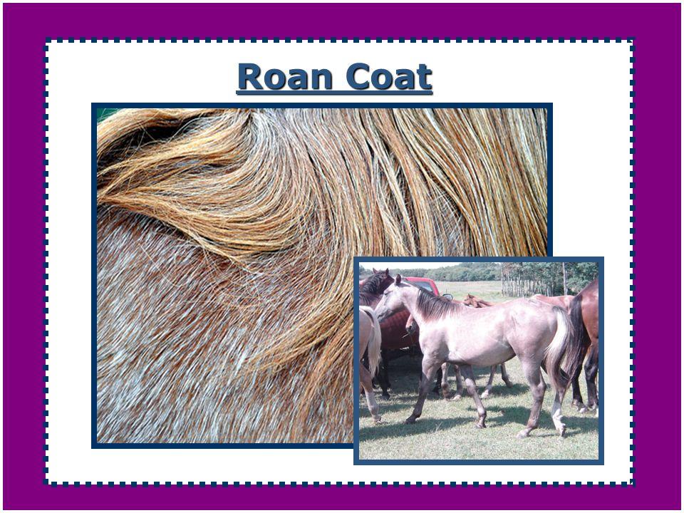 Roan Coat