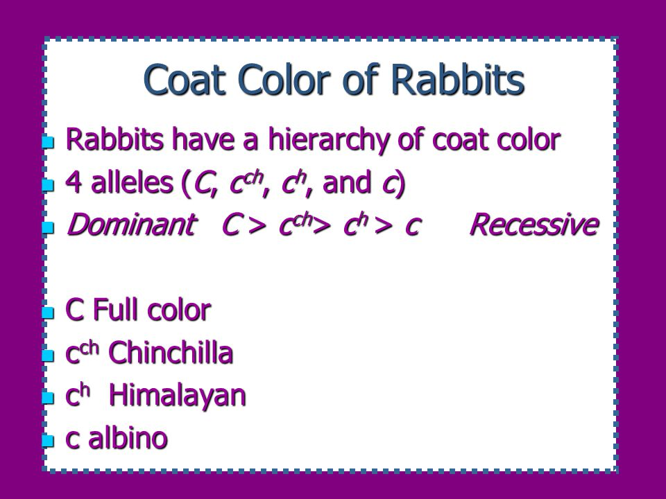 Coat Color of Rabbits Rabbits have a hierarchy of coat color