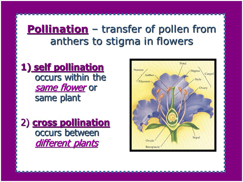 Pollination – transfer of pollen from anthers to stigma in flowers