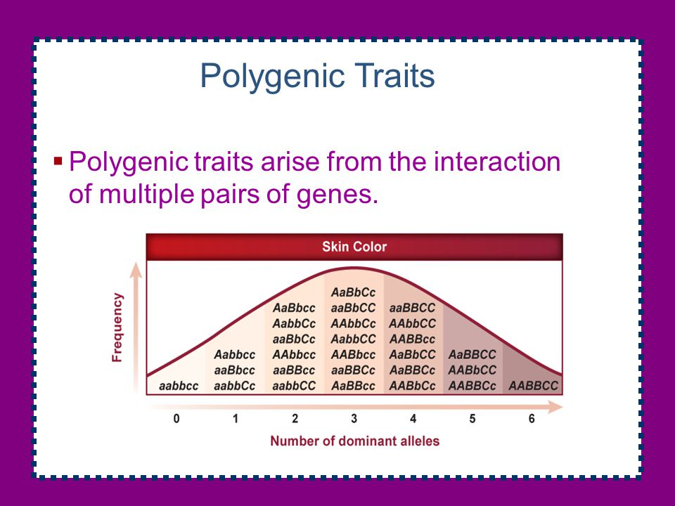 Polygenic Traits Polygenic traits arise from the interaction of multiple pairs of genes.