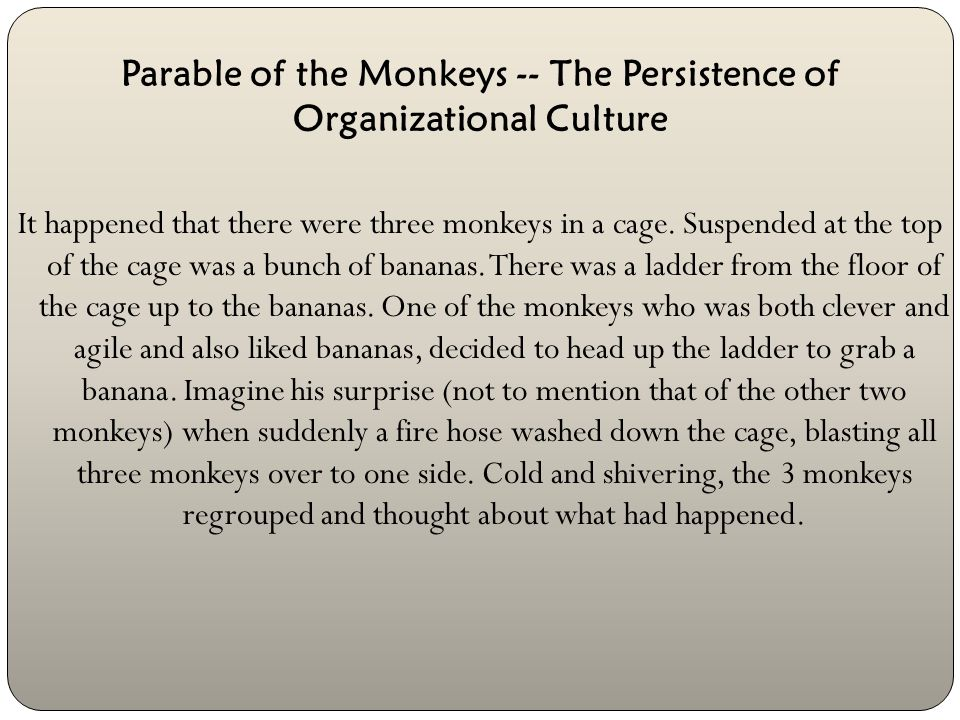 Parable of the Monkeys -- The Persistence of Organizational Culture