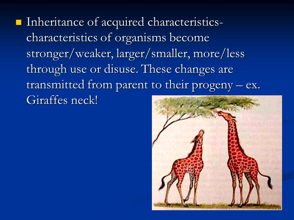 Inheritance of acquired characteristics- characteristics of organisms become stronger/weaker, larger/smaller, more/less through use or disuse.