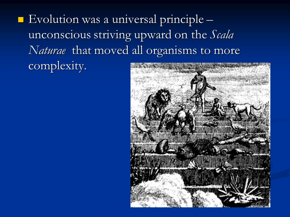 Evolution was a universal principle – unconscious striving upward on the Scala Naturae that moved all organisms to more complexity.