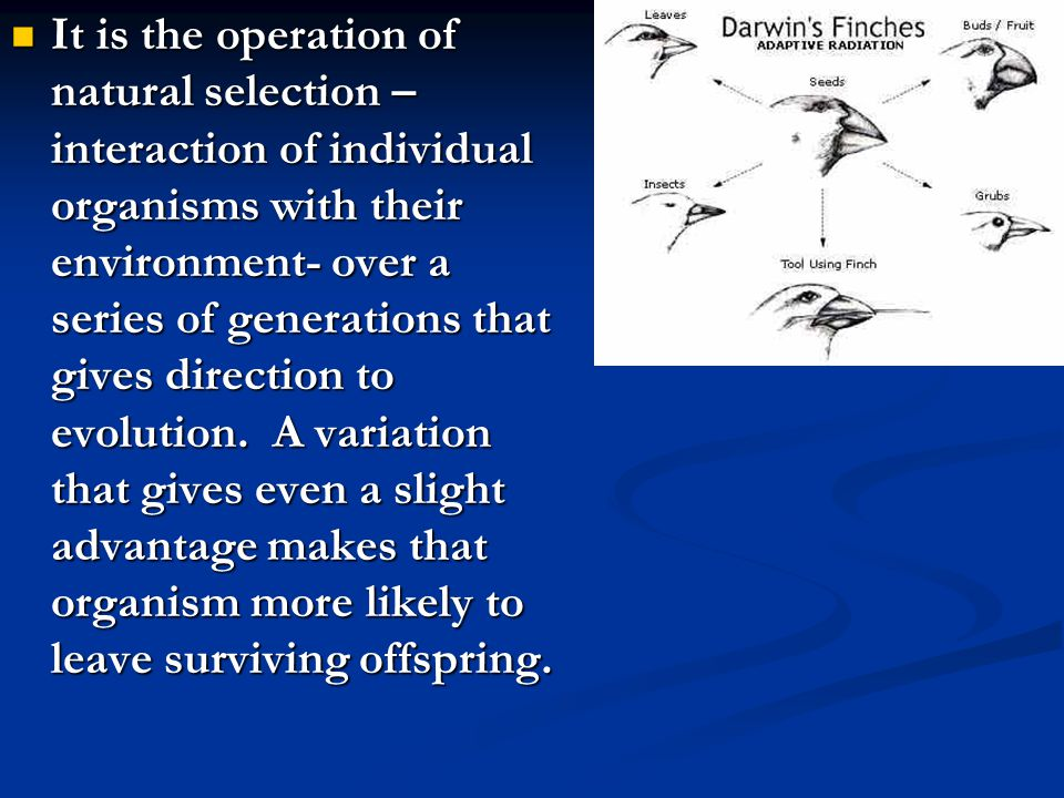 It is the operation of natural selection – interaction of individual organisms with their environment- over a series of generations that gives direction to evolution.
