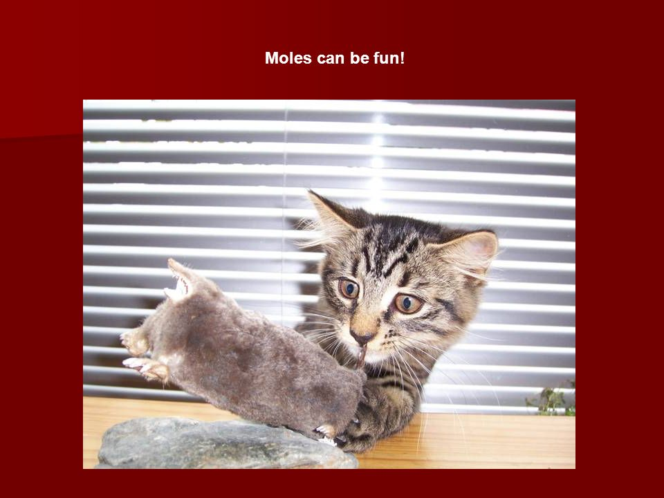 Moles can be fun!
