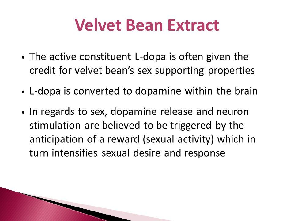 Velvet Bean ExtractThe active constituent L-dopa is often given the credit for velvet bean's sex supporting properties.