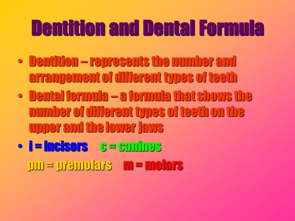 Dentition and Dental Formula