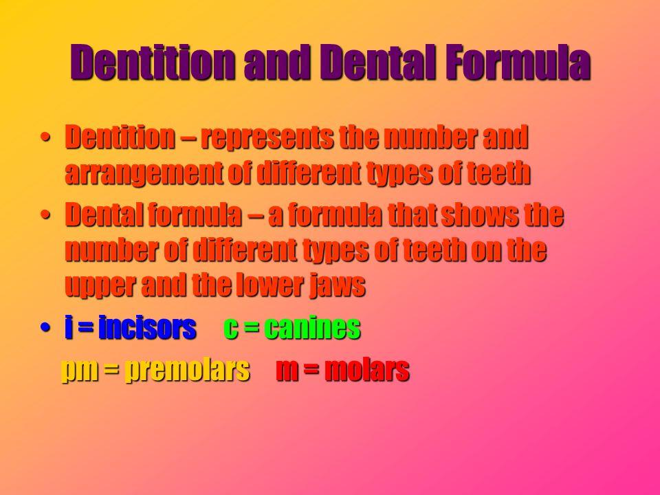 Dentition and Dental Formula