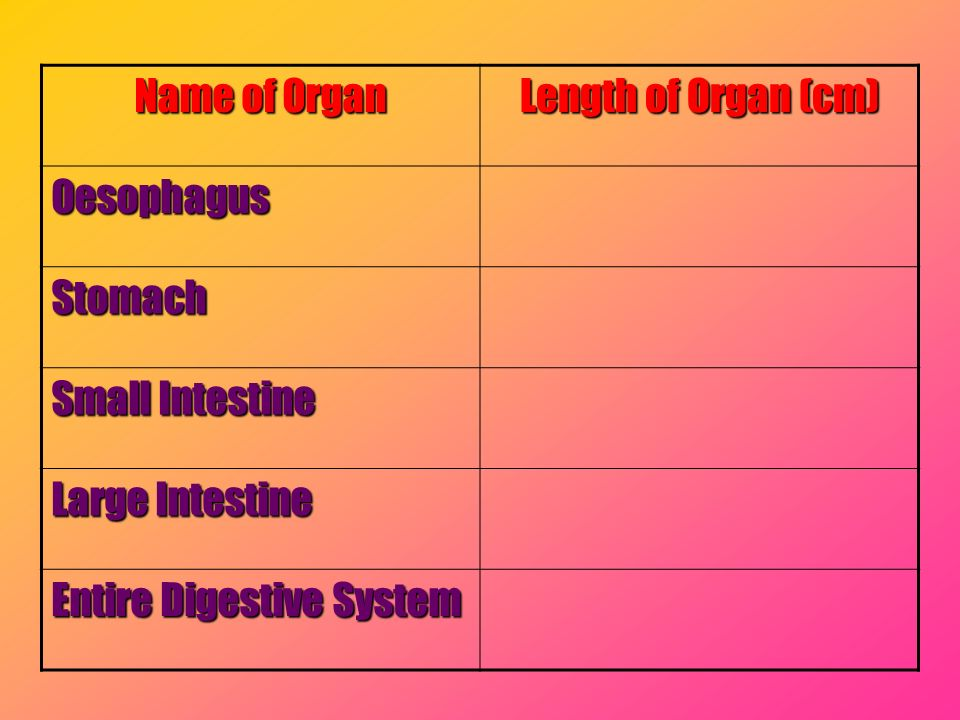 Name of Organ Length of Organ (cm) Oesophagus. Stomach.