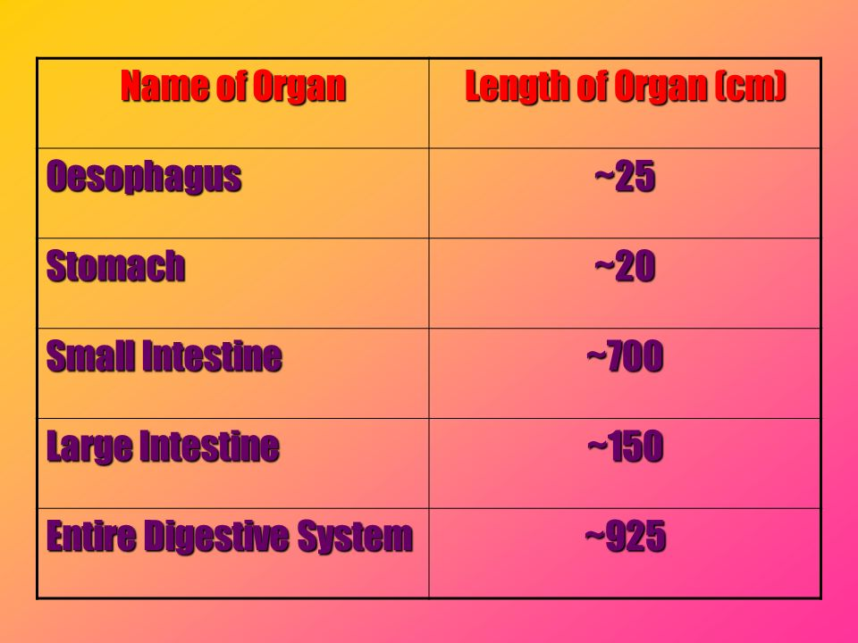 Name of Organ Length of Organ (cm) Oesophagus. ~25. Stomach. ~20. Small Intestine. ~700. Large Intestine.