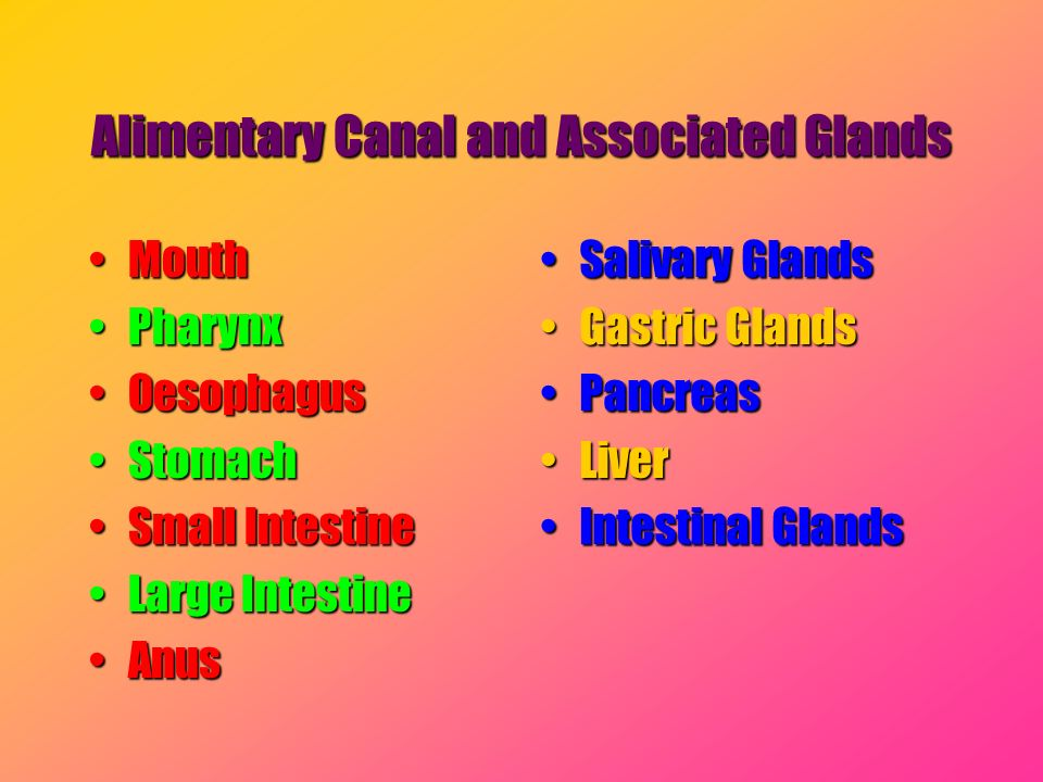 Alimentary Canal and Associated Glands