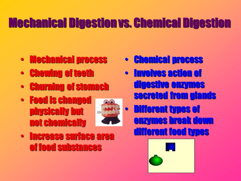 Mechanical Digestion vs. Chemical Digestion