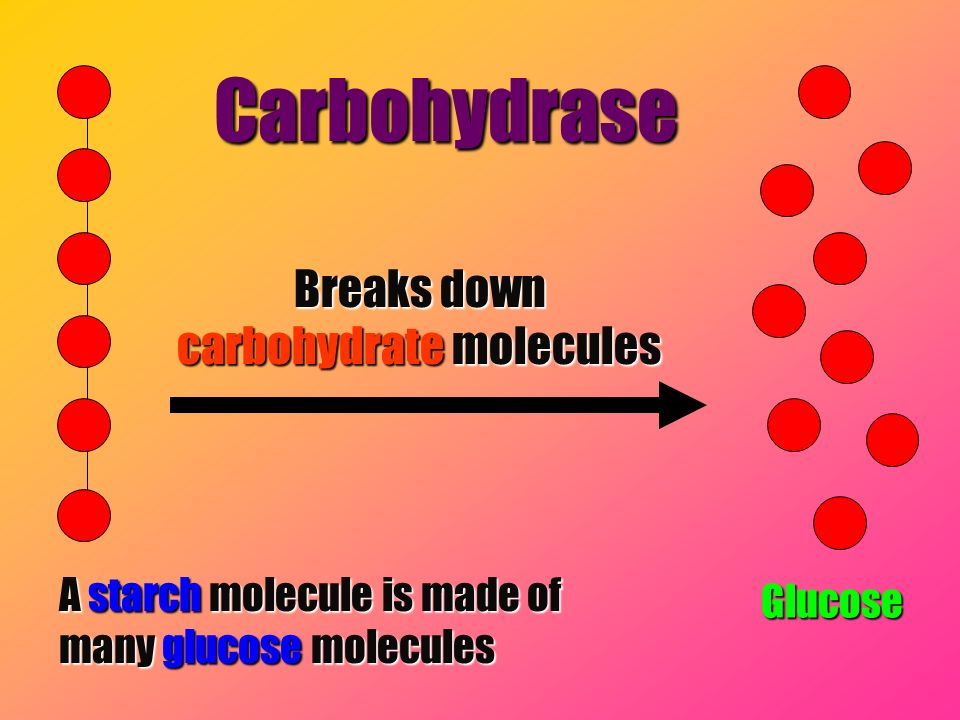 Breaks down carbohydrate molecules