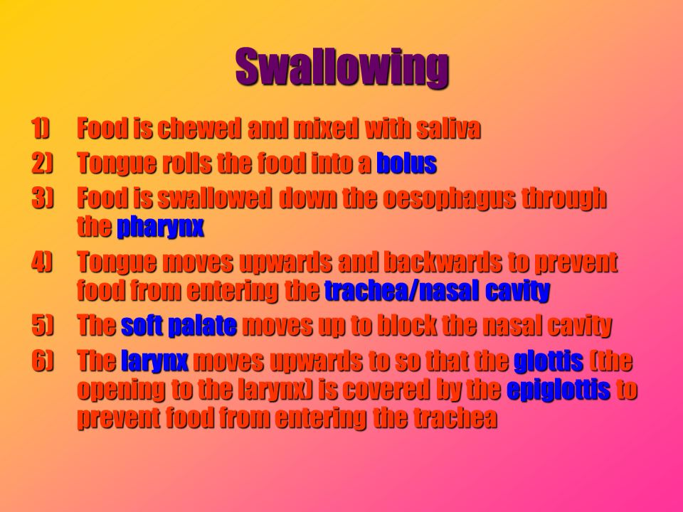 Swallowing Food is chewed and mixed with saliva