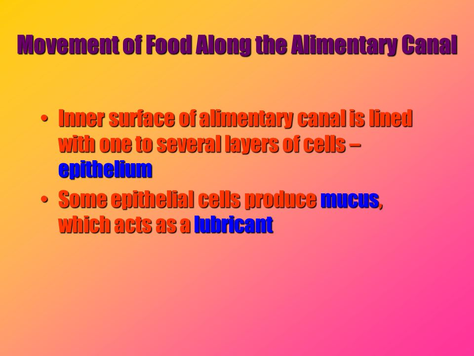 Movement of Food Along the Alimentary Canal
