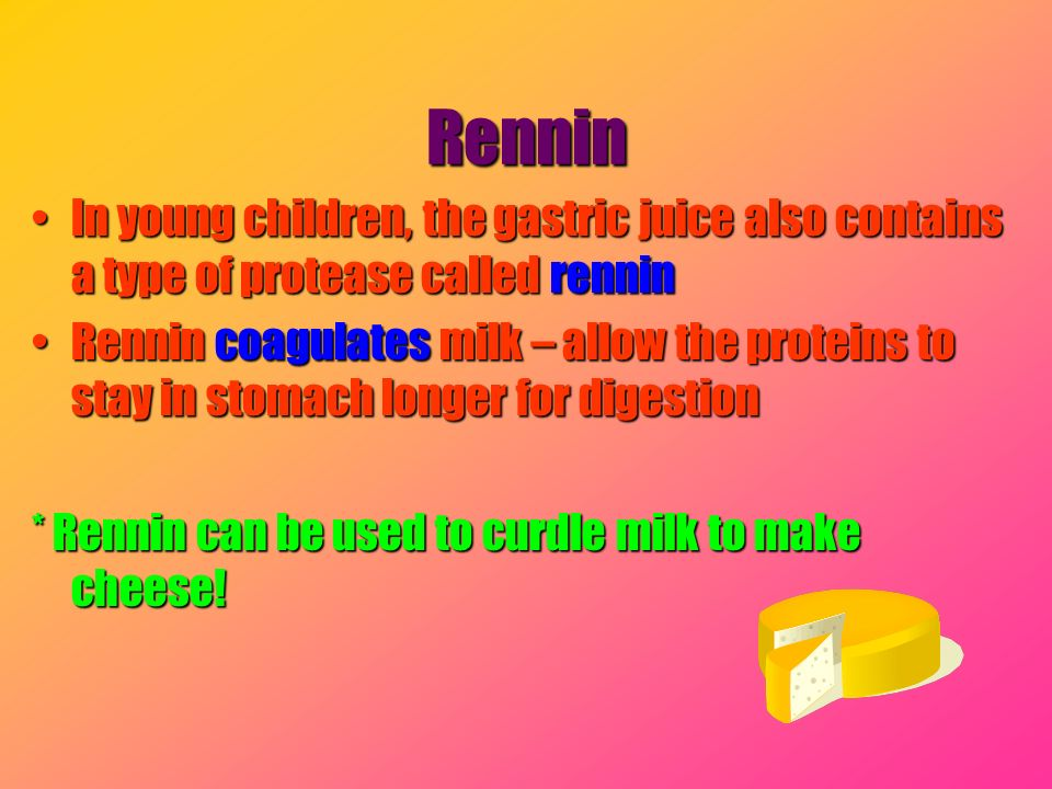 Rennin In young children, the gastric juice also contains a type of protease called rennin.