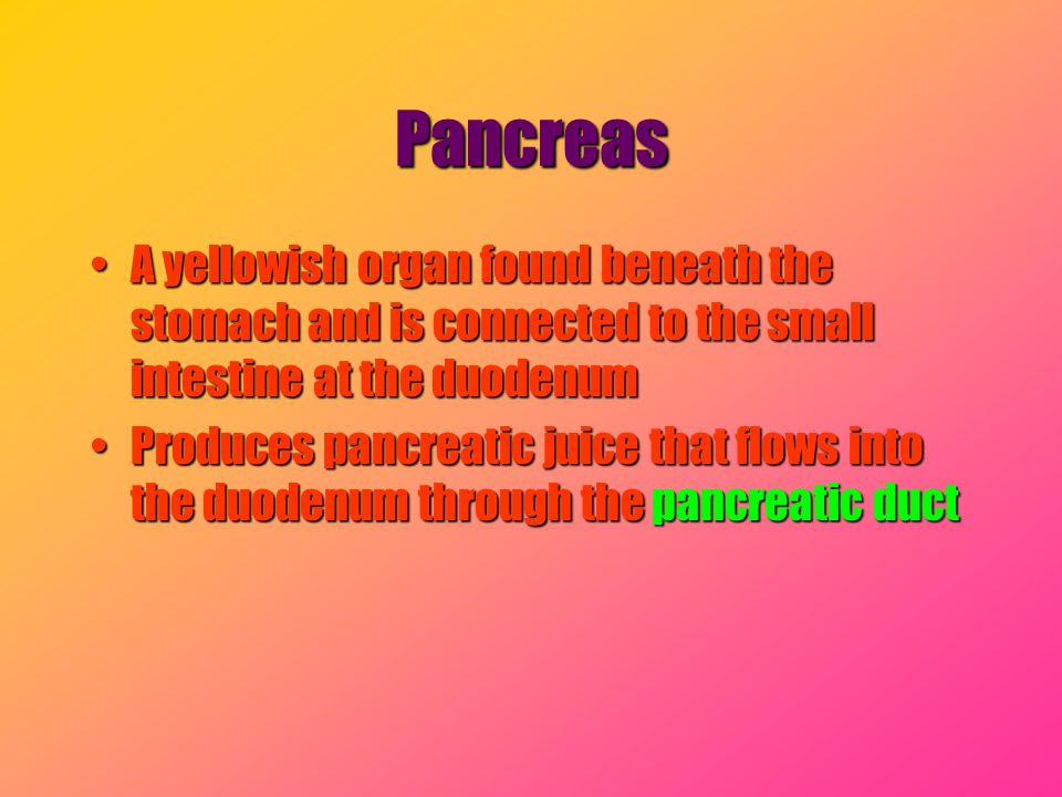 Pancreas A yellowish organ found beneath the stomach and is connected to the small intestine at the duodenum.