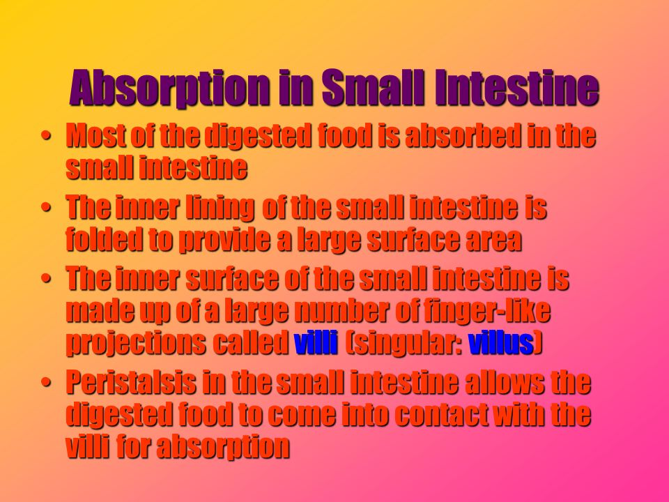 Absorption in Small Intestine