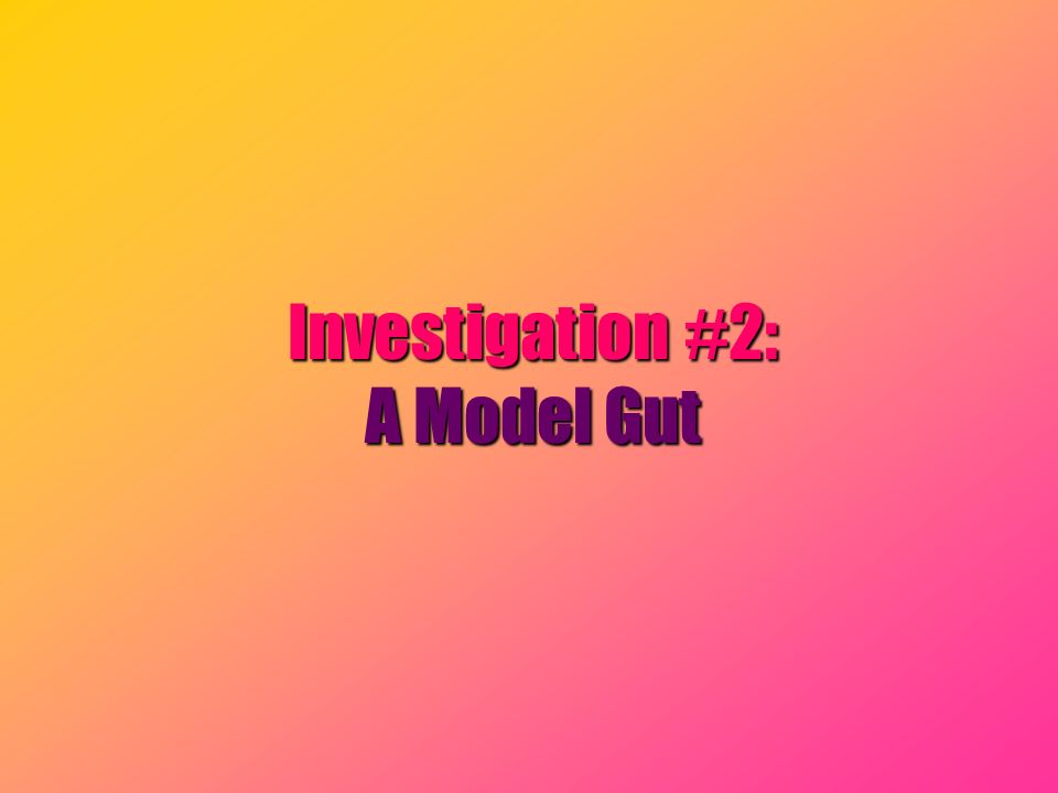 Investigation #2: A Model Gut