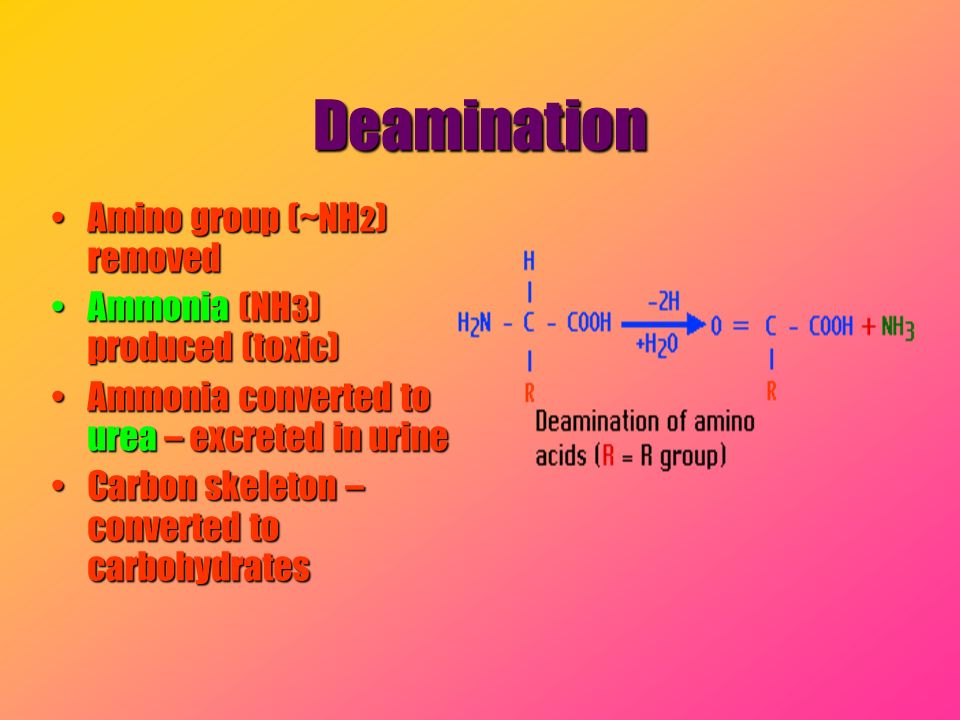 Deamination Amino group (~NH2) removed Ammonia (NH3) produced (toxic)