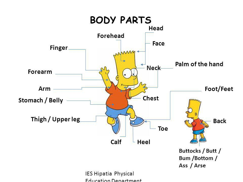 BODY PARTS Head Forehead Face Palm of the hand Neck Forearm Foot/Feet