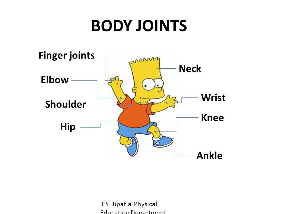 BODY JOINTS Finger joints Neck Elbow Wrist Shoulder Knee Hip Ankle