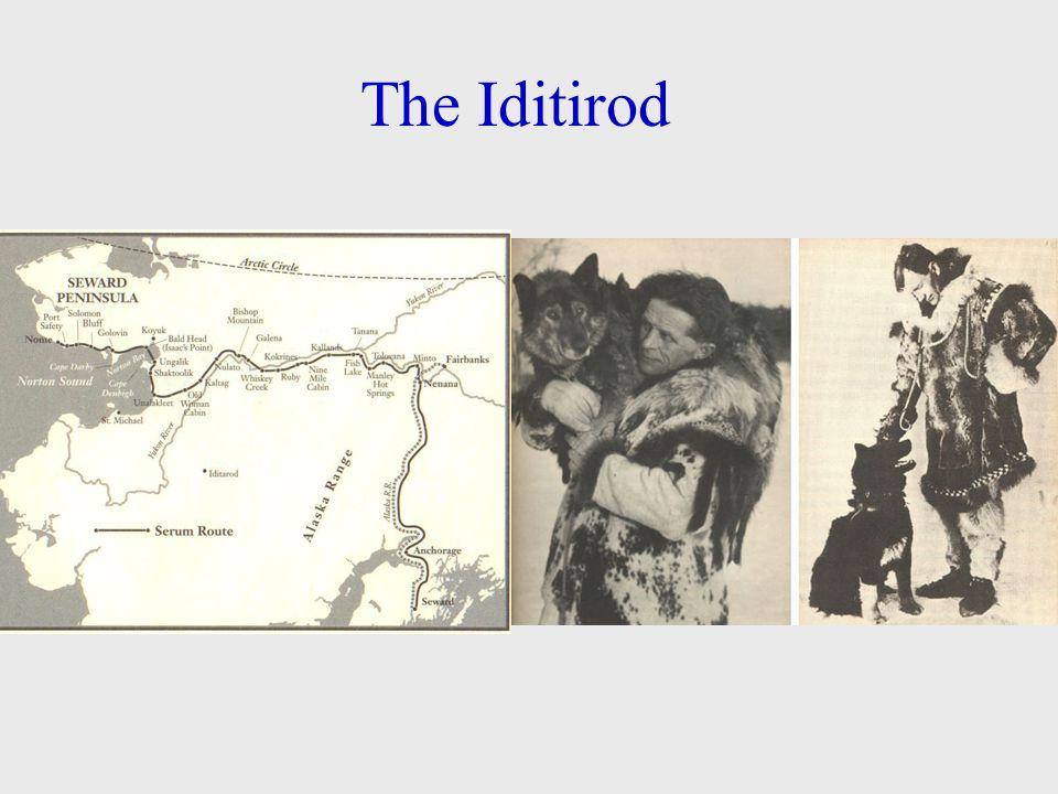 The Iditirod