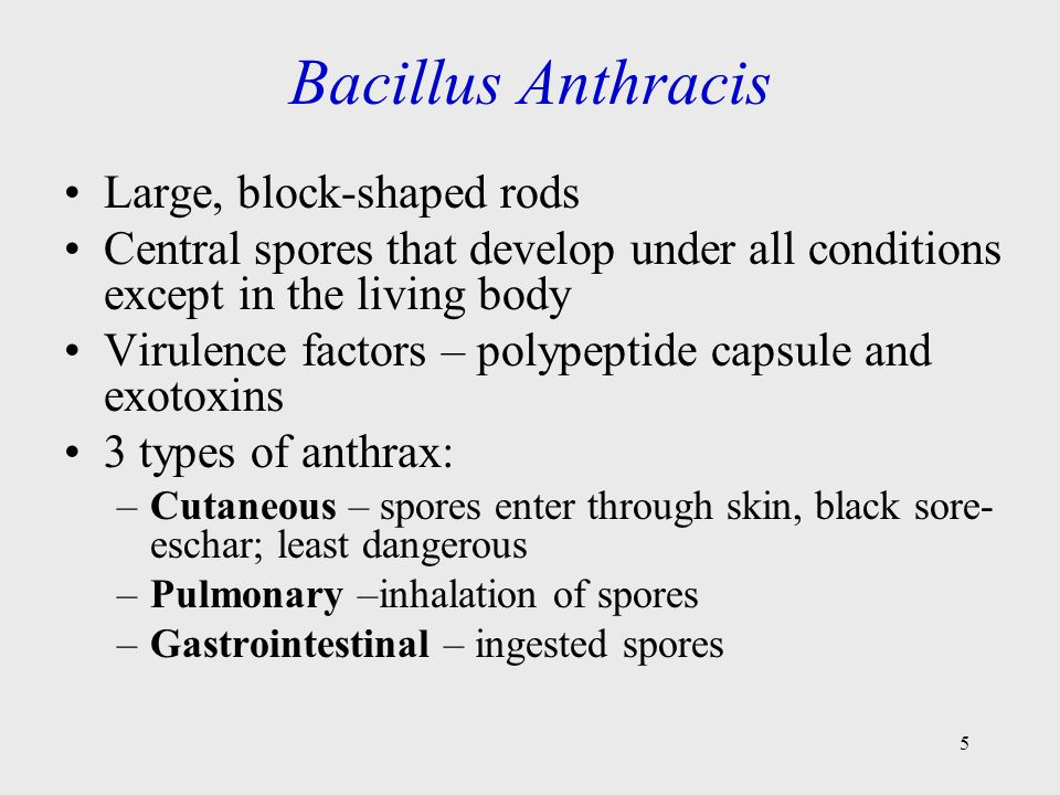 Bacillus Anthracis Large, block-shaped rods