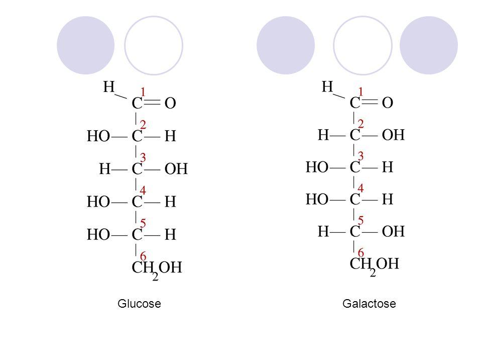 Glucose Galactose