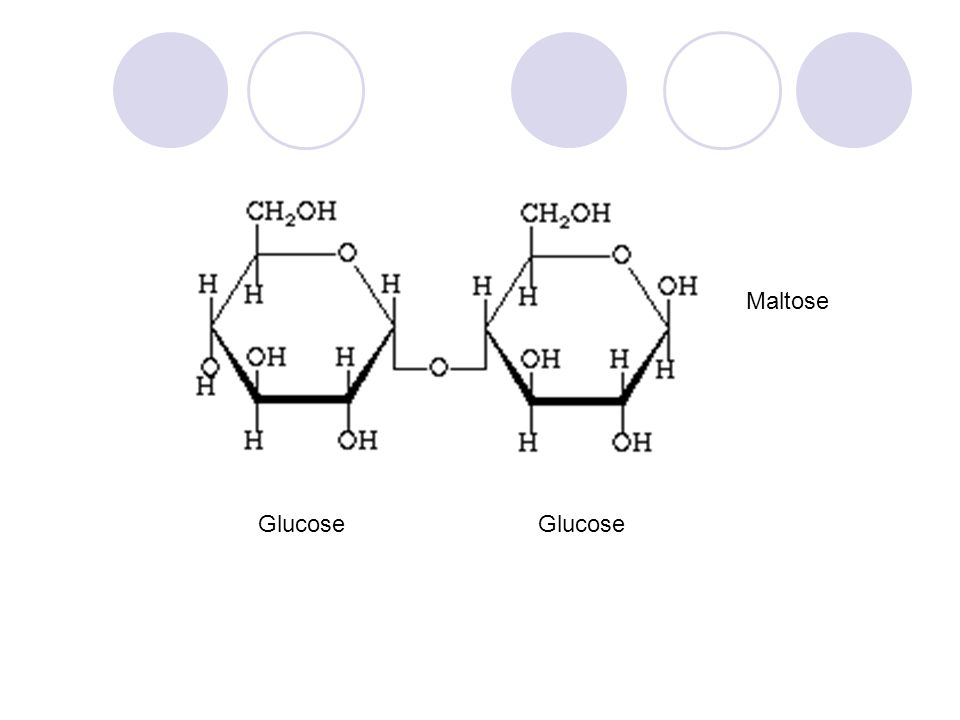 Maltose Glucose Glucose