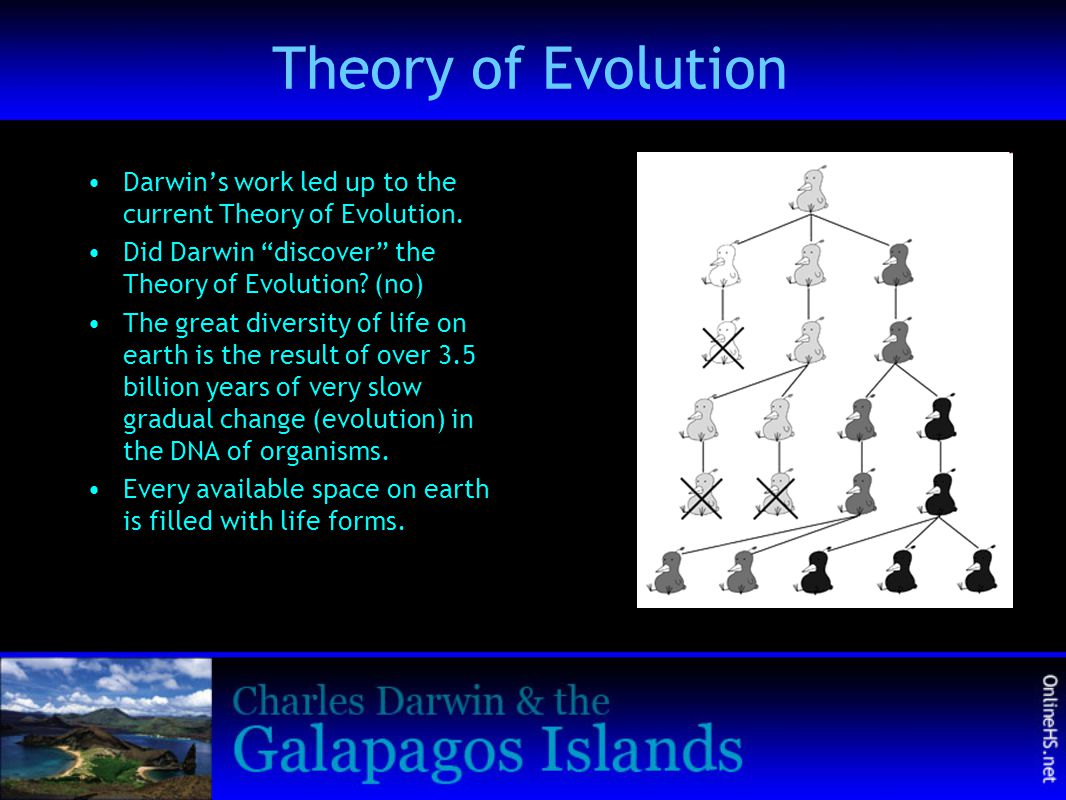 Theory of Evolution Darwin's work led up to the current Theory of Evolution. Did Darwin discover the Theory of Evolution (no)