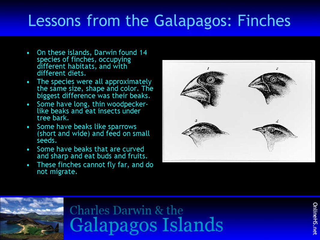 Lessons from the Galapagos: Finches