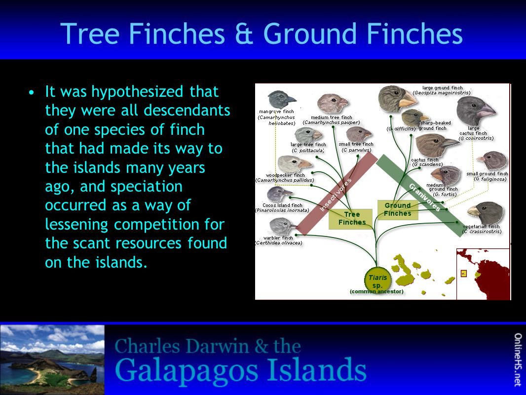 Tree Finches & Ground Finches