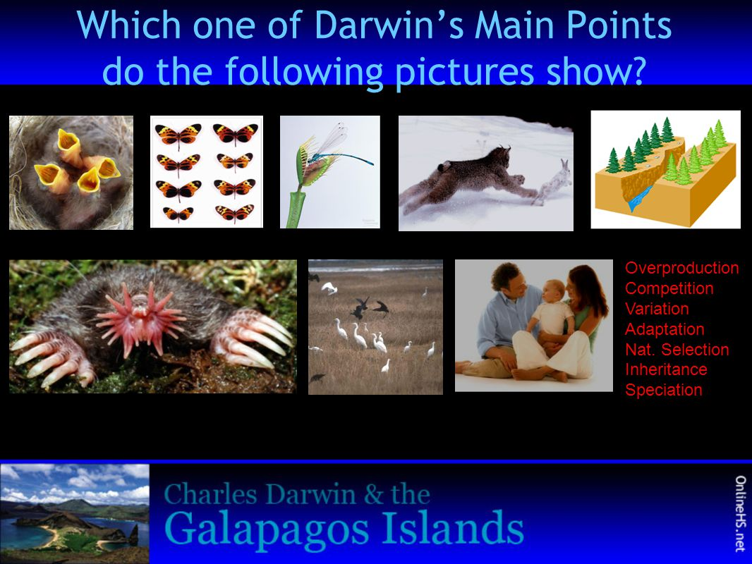 Which one of Darwin's Main Points do the following pictures show