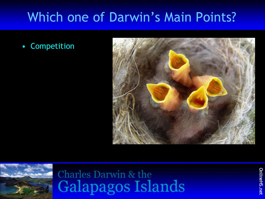 Which one of Darwin's Main Points